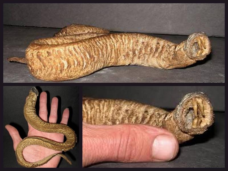 モンゴリアンデスワームの死体とされるもの