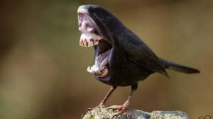 キモかわいい!? 歯を持った鳥 トゥースバード