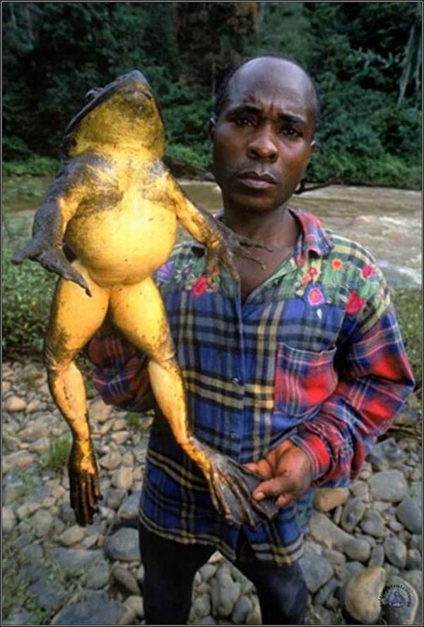 実在した巨大生物・カエル