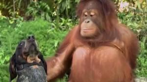 種族を超えた動物の友情!