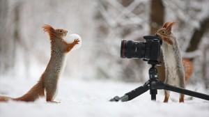 カメラ使えるの!? アカリスの奇跡のショット!