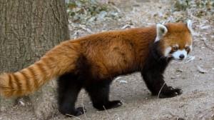 ホントは間違い 動物に関する誤った5つの常識