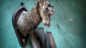 洋モノ廃墟は日本とは違った不気味さが・・・ アメリカの廃墟マニア マシュークリストファーの廃墟写真