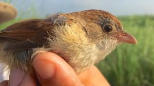 絶滅したと思われていた鳥が72年ぶりに発見される!