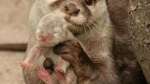 動物の親子愛は深い! アニマルファミリー写真30