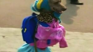 中国で二足歩行犬が出現!