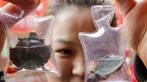 生きた亀や魚がストラップに!? 中国で売られていたアクセサリー