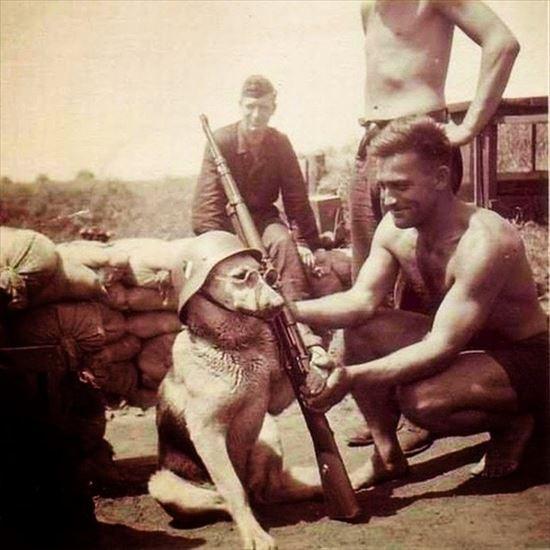 1940年 戦場で犬と遊ぶドイツ兵