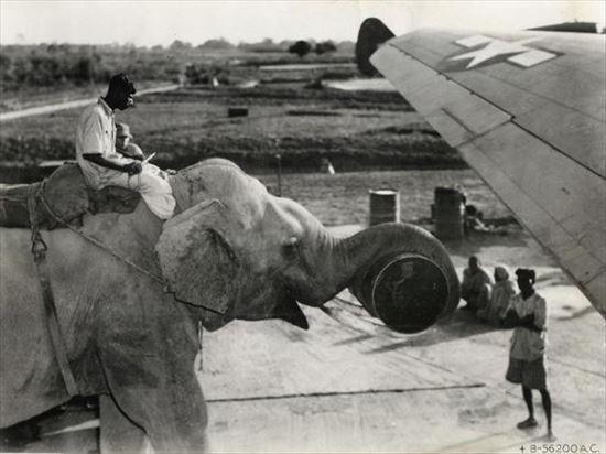 1945年 アメリカの飛行機に荷物を積むのを手伝うゾウ