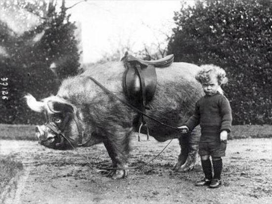 1930年 イノシシにのる男の子