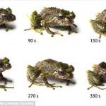 変形,カエル,新種