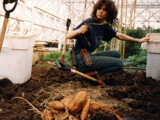 サツマイモを作っている様子