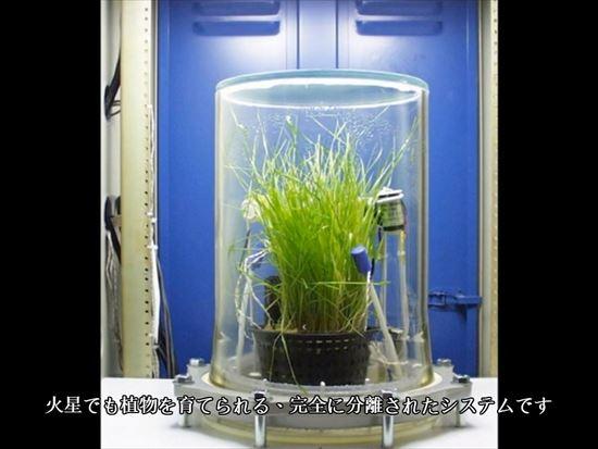 密閉環境で育成する植物