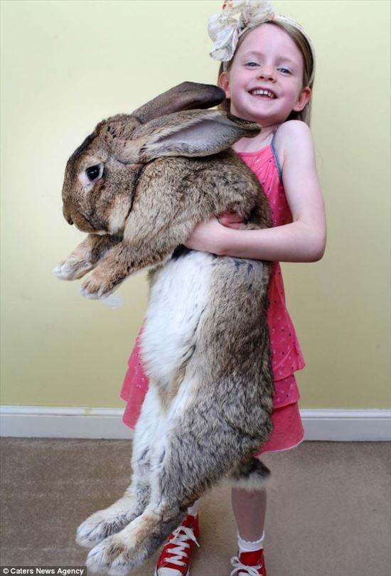 ギネスが認めた世界最大のウサギ、ダライアス 近々息子に記録を抜かれる模様