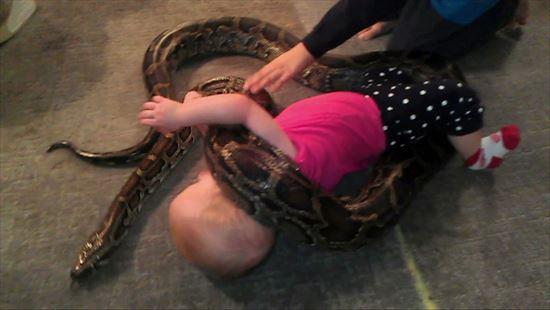 大蛇と戯れる赤ちゃん