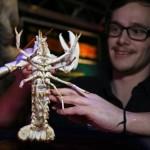 100万匹に1匹! メガ珍しい白いロブスター(アルビノ)がレストランから発見される!