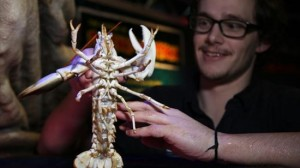 100万匹に1匹! メガ珍しい白いロブスターがレストランから発見される!