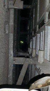 5年間壁の中に閉じ込められていた猫と、その命をつないだおじさん