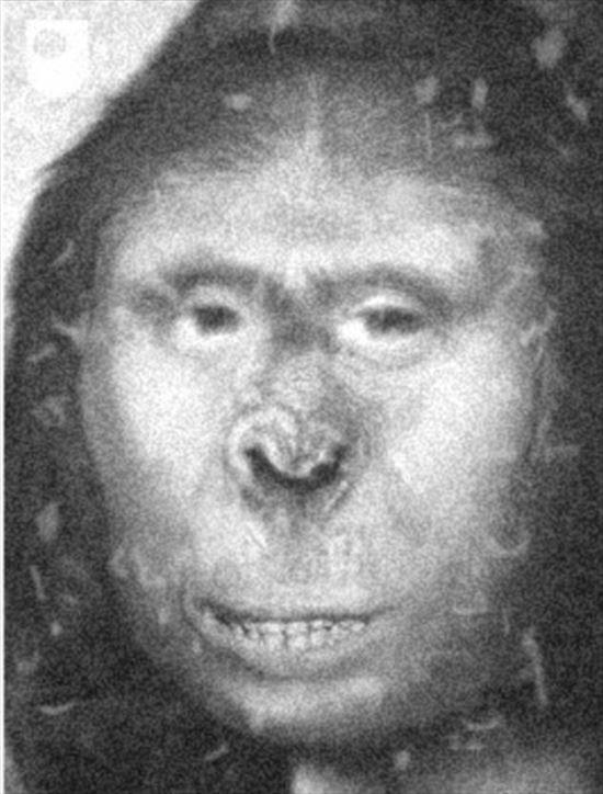 ビッグフット実在か!? 19世紀のロシアの女性ザーナ DNA鑑定から判明!