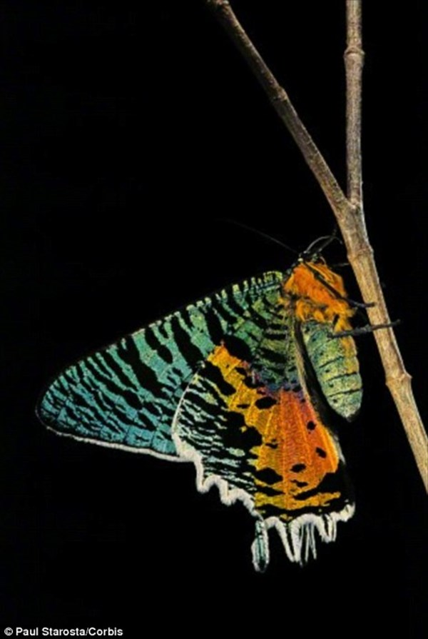 神秘的!キャノンのカメラと顕微鏡を使って撮影した蝶の羽のマクロ写真!