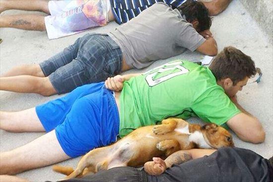「逮捕だ!地面に伏せろ!」 逮捕されるギャングと... 逮捕されるギャングと一緒に飼い犬が服従す
