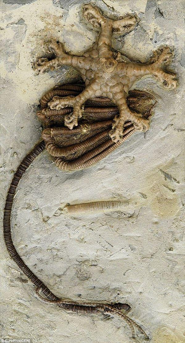 古代文明?それともエイリアンの仕業? ネジのような3億年前の化石!