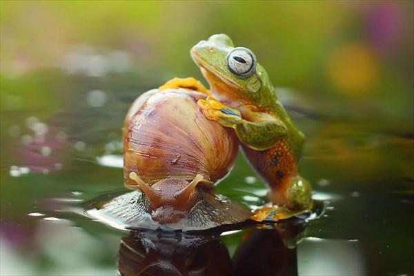 幸せそうなカエルがかわいい