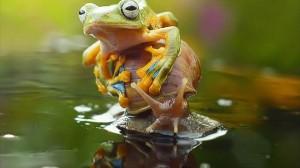 カタツムリを完璧に乗りこなすカエル!
