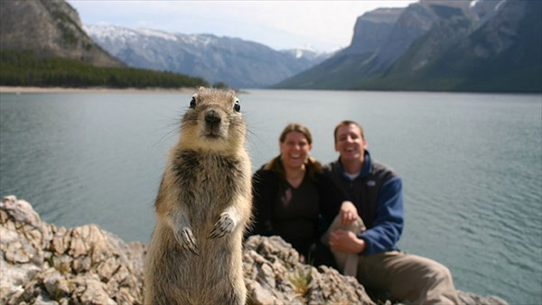 面白い動物の写真