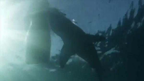 恐怖! 小型ボートを襲う巨大なホオジロザメ!!