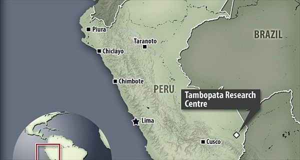 ペルーで発見! 音に反応して触手をウニョウニョ動かすシャクトリ虫