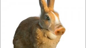 架空生物図鑑NO.02 ブタウサギ