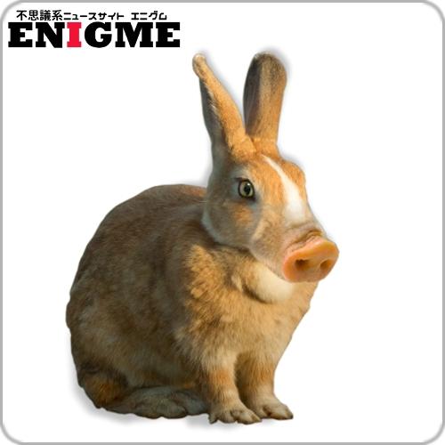 ブタウサギ