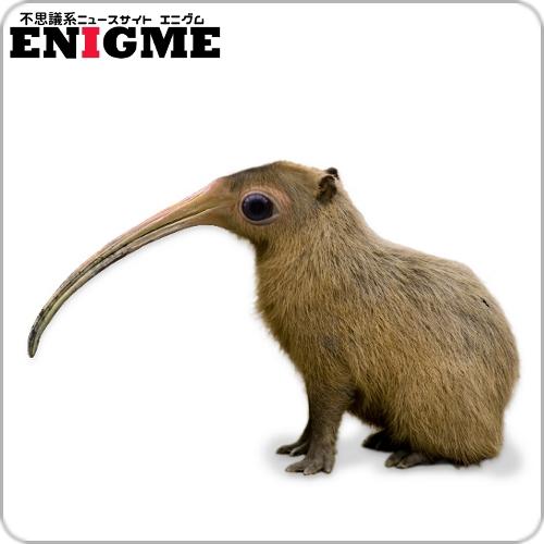 架空生物図鑑,ヌマオオネズミ