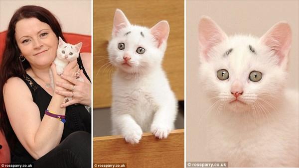 超癒される! 困り顔の白猫のゲイリー
