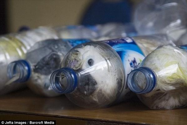 残酷すぎる! ペットボトルにオウムを入れて輸送する最新の密輸!