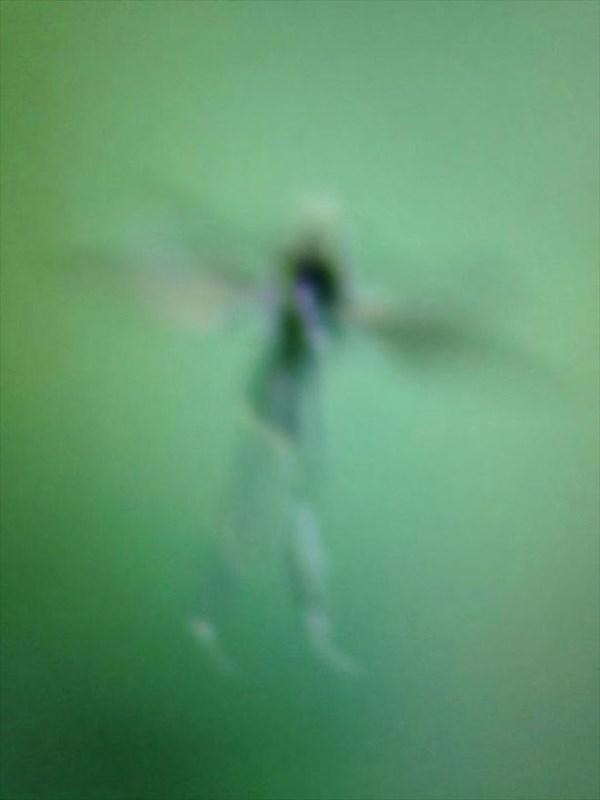 信じる?信じない? あの妖精 ティンカーベルの撮影に成功?
