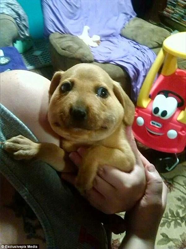 顔がパンパンにされた子犬