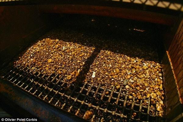 ダイヤ採掘の手掛かりに!? ダイヤモンドが埋まる地表だけに生える植物発見!