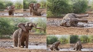 泥浴びをするアフリカゾウのフォトショット