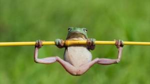むんっ!鉄棒をするアマガエル!! +@釣った魚の口の中で笑うカエル