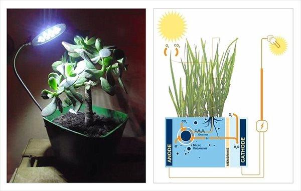 永久機関!? 観葉植物の植木鉢から発電 究極電源バイオサーキット!
