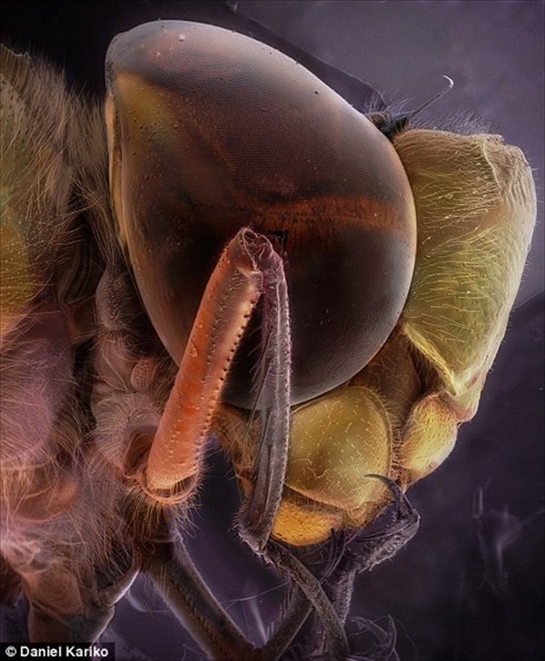 身近な昆虫の意外な表情! 顕微鏡で撮影した昆虫の肖像画フォト15選!!