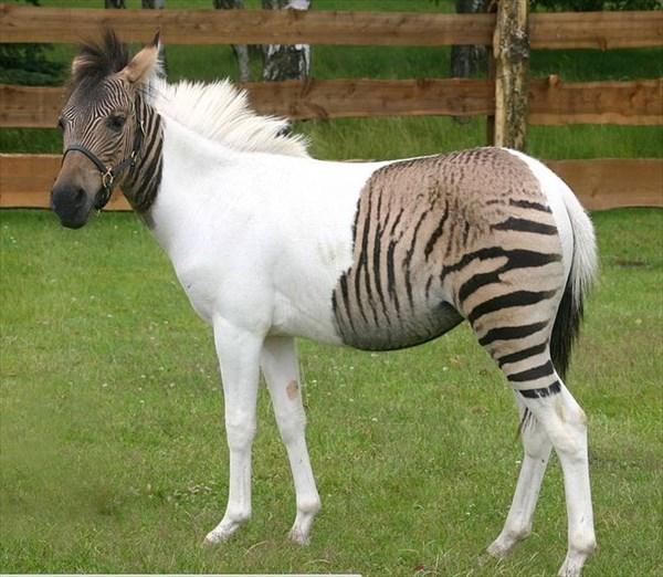 奇妙で美しい遺伝的変異 2トーンカラーの動物達 11枚!