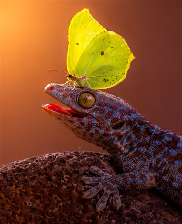 蝶と動物の美しすぎる写真 20枚!!