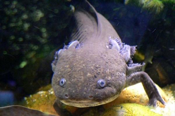 魚に手足が!? アメリカ・コロラド州で発見された謎の生物の死骸!