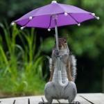 またまたマックス・エリスによる可愛いリスの写真! 今度は傘をさすリス!