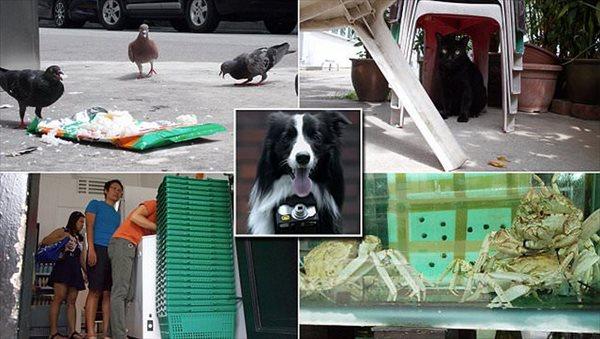 犬は何に興奮する? 首輪に心拍数センサー付きカメラをつけて犬が撮影した写真!