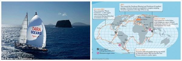 いざミクロの世界へ! 海のプランクトンを拡大して見てみると奇妙なクリーチャーたちが!