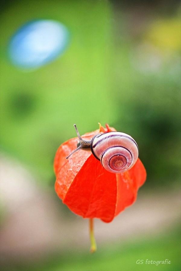 もうすぐ梅雨! カメラマンがカタツムリをどこまで可愛く撮れるか挑戦!18枚